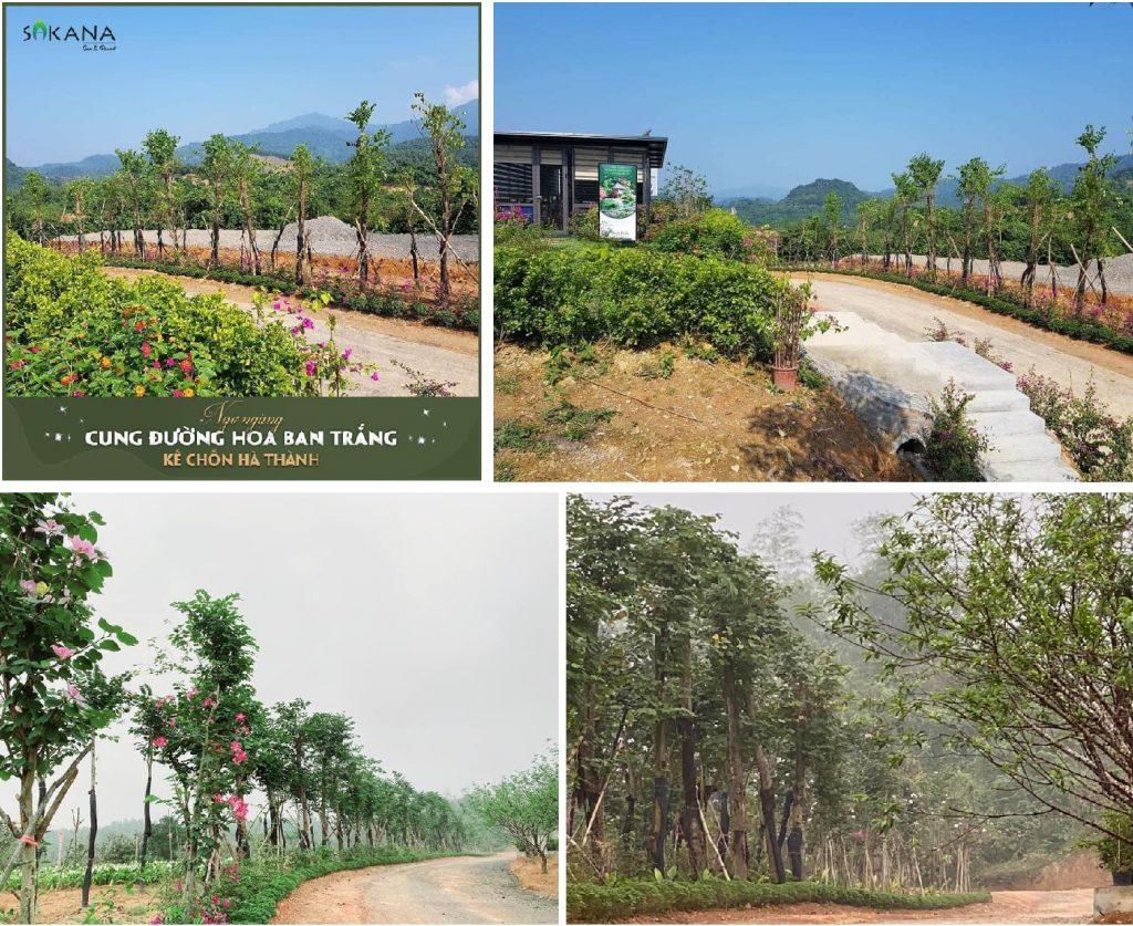Tiến độ dự án Sakana Resort Hòa Bình 2020