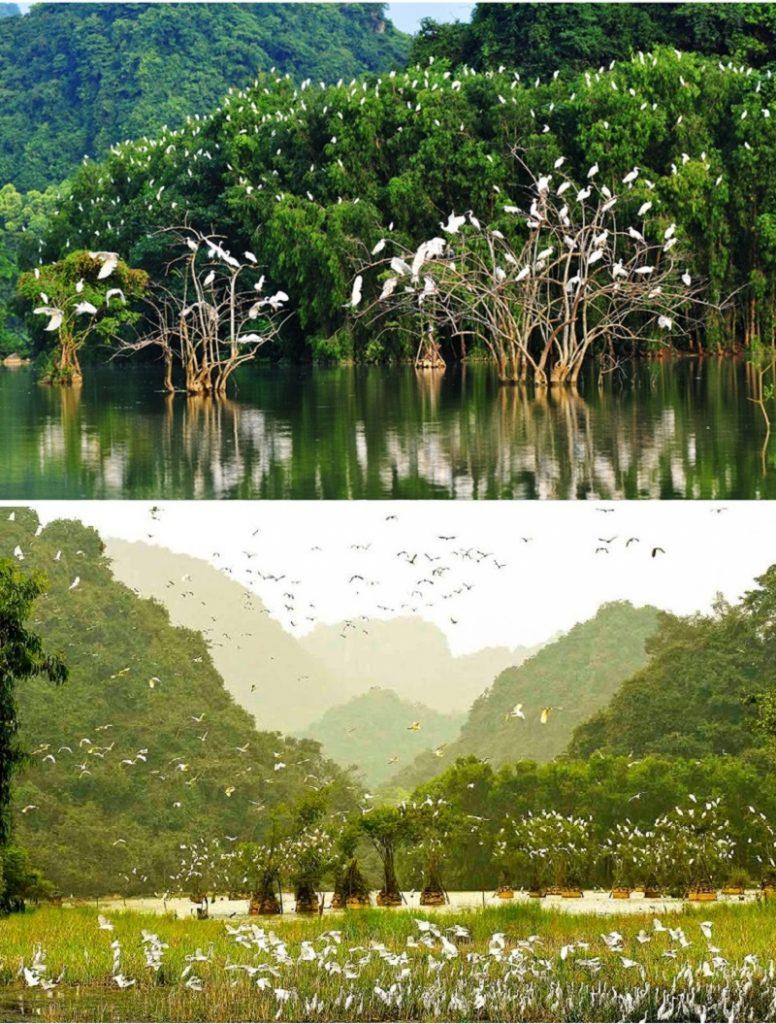 Vườn Chim Thung Nham Ninh Bình (Life Resort Ninh Hải)