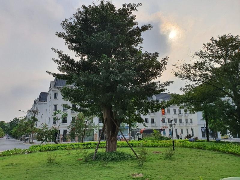 Khuôn viên cây xanh Lacasta Tower Văn Phú - Hà Đông 2