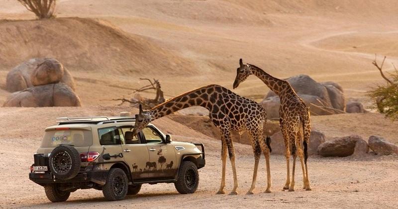 Vườn thú Safari dự án Novaworld Phan Thiết - Bình Thuận